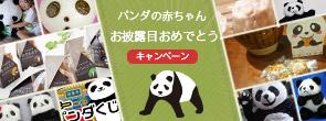 パンダの赤ちゃんお披露目おめでとうキャンペーン